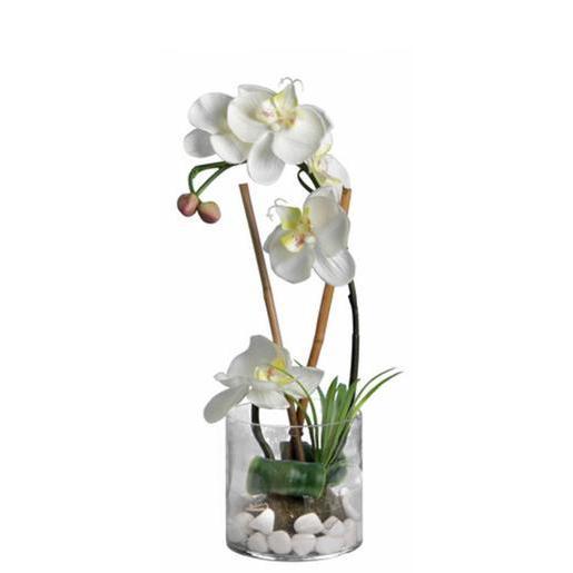 orchidee vase verre