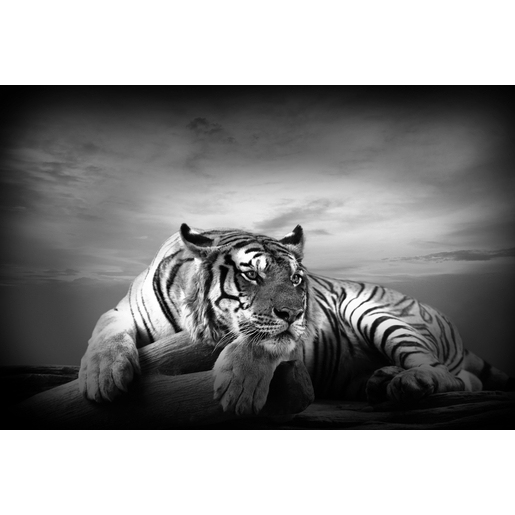 tableau photo tigre mdf 97 x 22 x h 65 cm